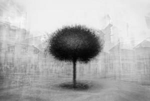 Frank Machalowski - Stadtbaum
