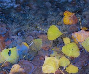 Nausicaa Cortina - In The Fall